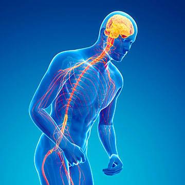 brain-central-nervous-system