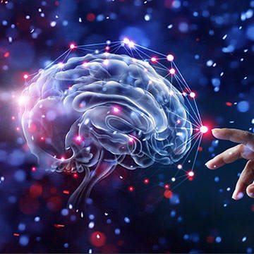 brain network 3D rendering